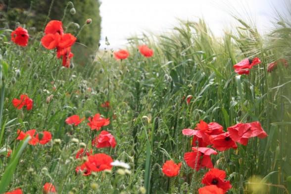 Poppyland, Overstrand, Norfolk